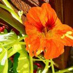 Kesän kukkaloistoa